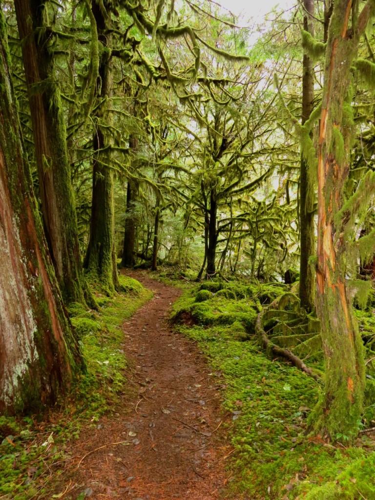 McKenzie River, Oregon, mossy forest